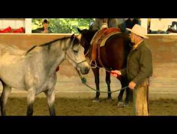 Buck Filmy o koňoch : Top 10