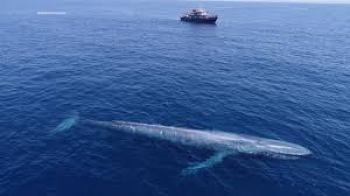 Modrá veľryba najväčšie zviera na svete