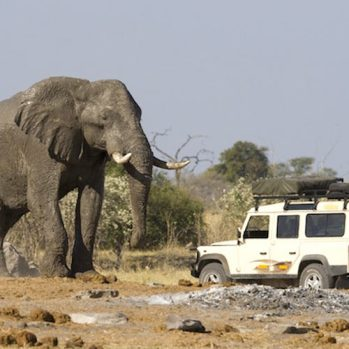 Slon Africký Loxodonta najväčšie suchozemské zviera na svete