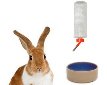 Čerstvá voda pre zajaca