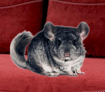 zvierata vhodne do bytu