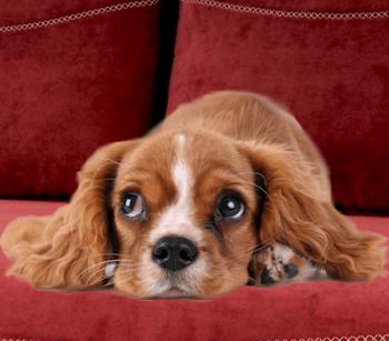zvierata vhodné do bytu