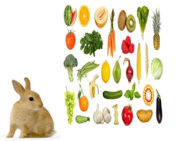 Zelenina Pochúťka pre zajace