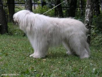 Juhoruský ovčiak