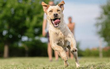 ako ukludniť psa