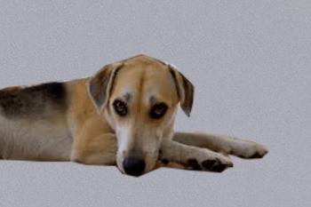 prečo pes knucí