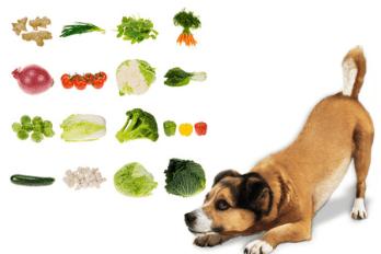 zelenina ktorú pes môže a nemôže jesť