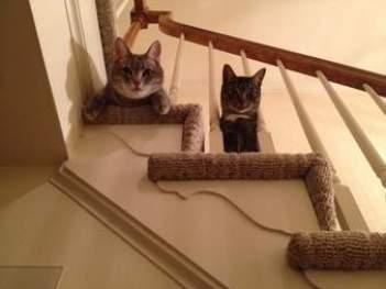 mačka ma stále sleduje  mačka vyznáva lásku