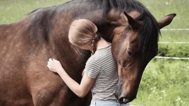 kôň vyznáva lásku Obtiera sa o vás