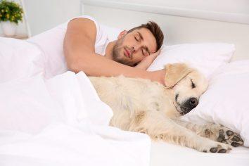 Pes spí vo vašej posteli ako pes vyznáva lásku
