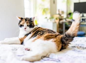 mačka kýva s chvostom mačka vyznáva lásku