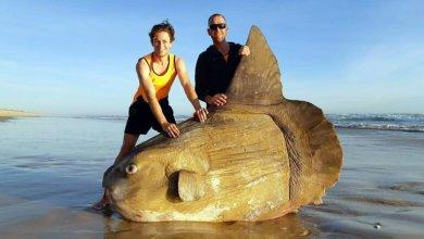 Mesačník svietivý Najväčšie morské tvory