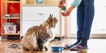 Ako vycvičiť mačku, aby prišla na povel