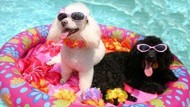 Leto a psy 10 tipov pre majiteľov psov počas leta