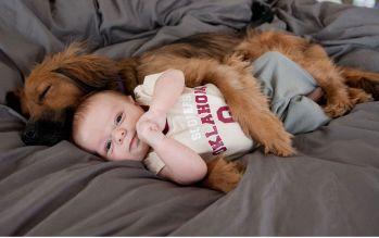 ako pripraviť psa na dieťa 2