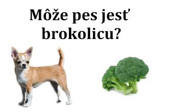Môže pes jesť brokolicu