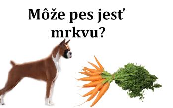Môže pes jesť mrkvu