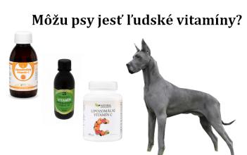 Môžu psy jesť ľudské vitamíny