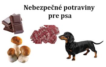 Nebezpečné potraviny pre psa
