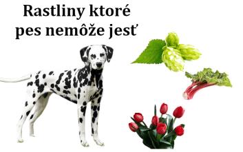 Rastliny ktoré pes nemôže jesť