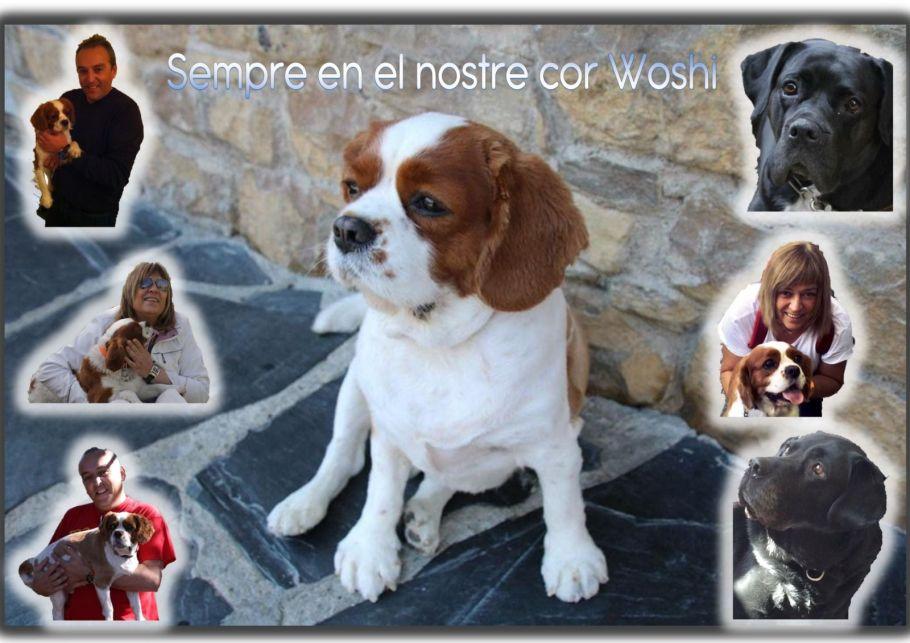 Woshi mascota de Carme y Xavi Tobaja - Topdisco Radio