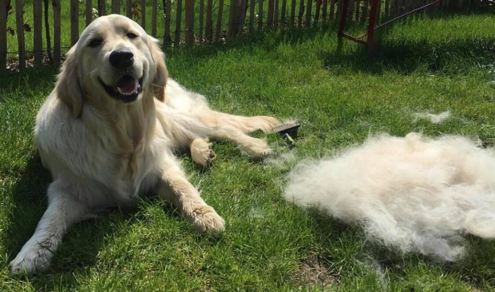 Best Dog Brush For Shedding 2020 [Deshedding Tools]
