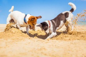 socializing dogs to prevent barking