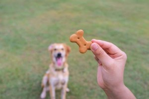 stop dog barking with doggy treats