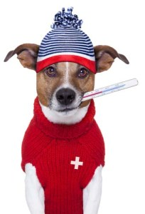 Signs of fever in dogs