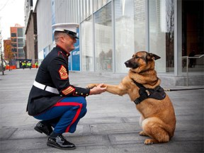 Book Review Top Dog The Story of Marine Hero Lucca 2