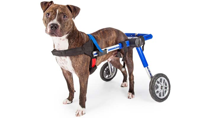 wheelchair dog lazyboy chair accessories top 7 best for back legs to help with mobility 2017 the purpose of