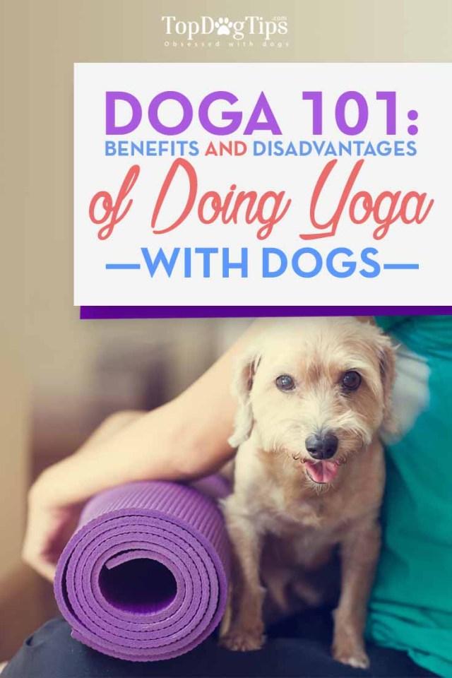 Doga 101 - Benefits and Necessary Precautions for Doing Dog Yoga
