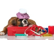 Essential Items to Have in Your First Aid Kit for Dogs
