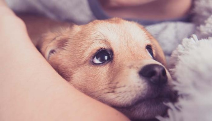 Popular Best Dog Names for Male Dogs