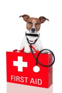 Why have a first aid kit for dogs