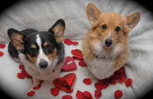 Americans Spending $700+ Million on Pets for Valentine's, New Study Says