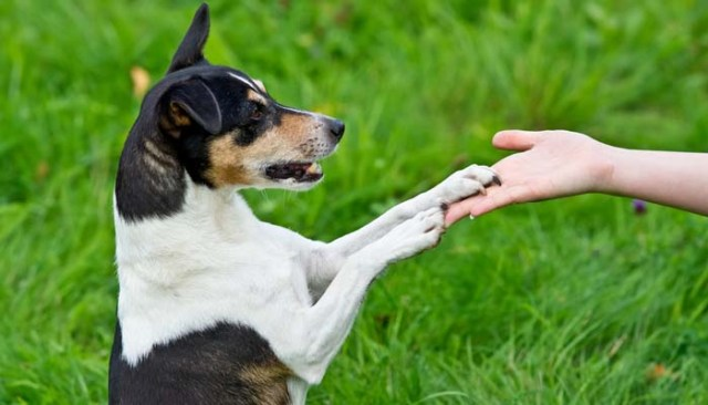 Checklist for Choosing Best Obedience School for Dogs