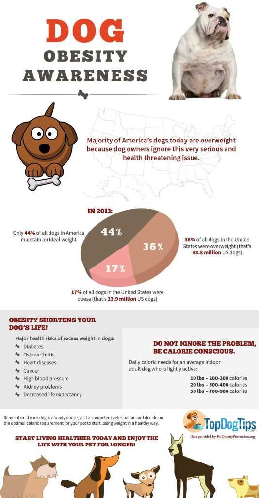 Dog Obesity Awareness