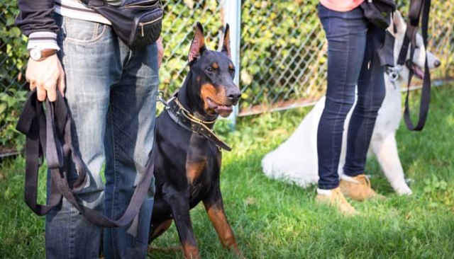 How to Pick the Best Obedience School for YOUR dog