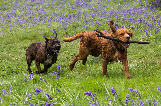 Ways Dog Owners Can Go Green and Eco-Friendly