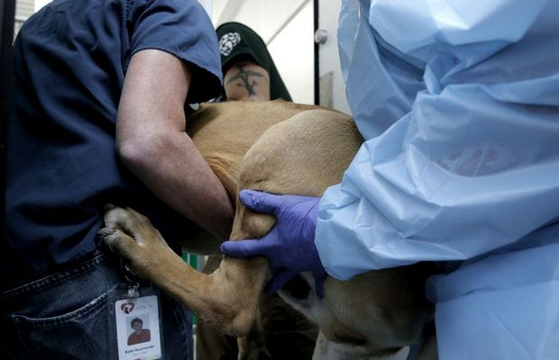 57 Dogs Rescued From a Meat Market in Korea