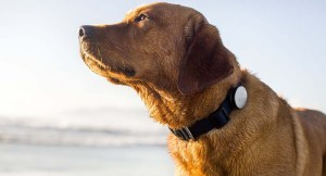 What Are Dog GPS Collars and Trackers?