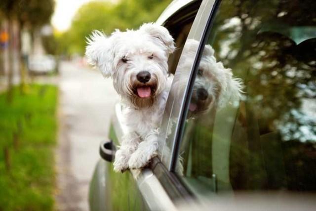 Best Small Dogs for Kids Maltese