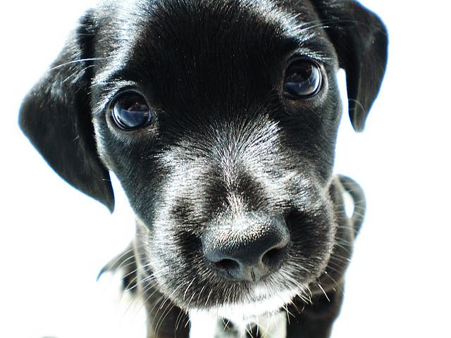 Essential Tips on Dog Training Basics