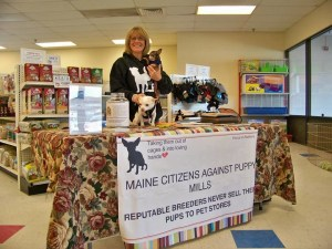Maine Lawmaker Proposes Bill Targeting Puppy Mills
