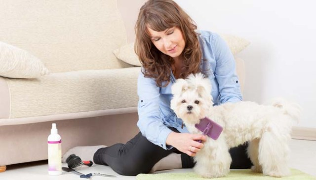 Professional dog groomer grooming a dog