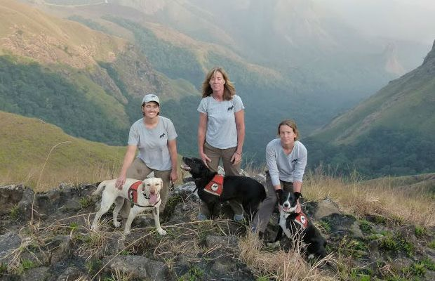 Scientists Using Shelter Dogs to Sniff Out Rare Gorillas