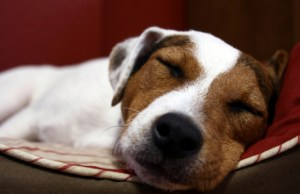 Sit. Stay. Forever. Now Offering Line of Toxin Free Pet Products