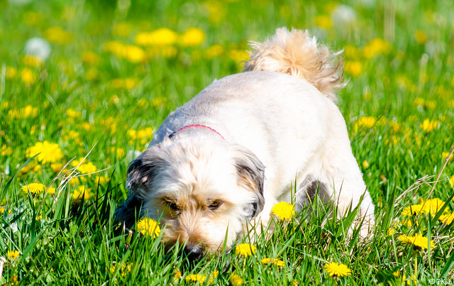 Unusual Facts on Dogs 4