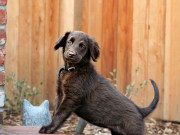 Unusual Facts on Dogs 7